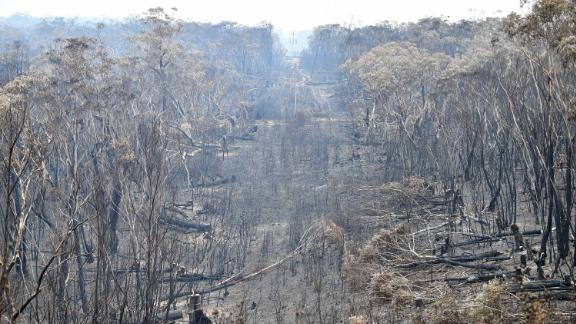 Burnt trees after a bushfire in the Blue Mountains, some 120 kilometres northwest of Sydney on December 18.