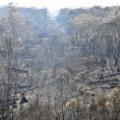 02 australia bushfire 1218