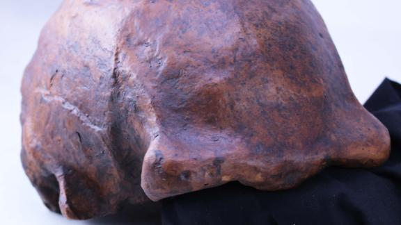 A Homo erectus skull cap discovered in Central Java, Indonesia reveals how long they lived and when the first human species to walk upright