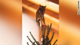 A Georgia Family Found An Owl Hiding In Their Christmas Tree