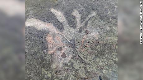 The world's oldest known fossil forest has been discovered in a quarry in upper New York state