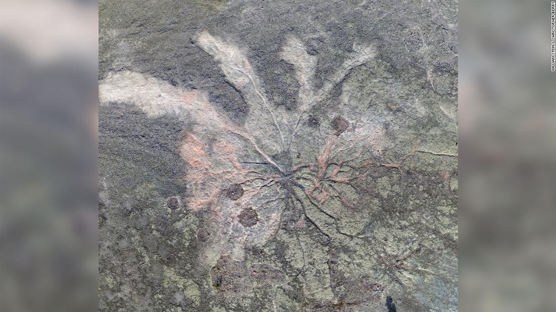 証拠を世界で最も古い歴史を持つ森林、さかのぼ385万年前に発見されてい