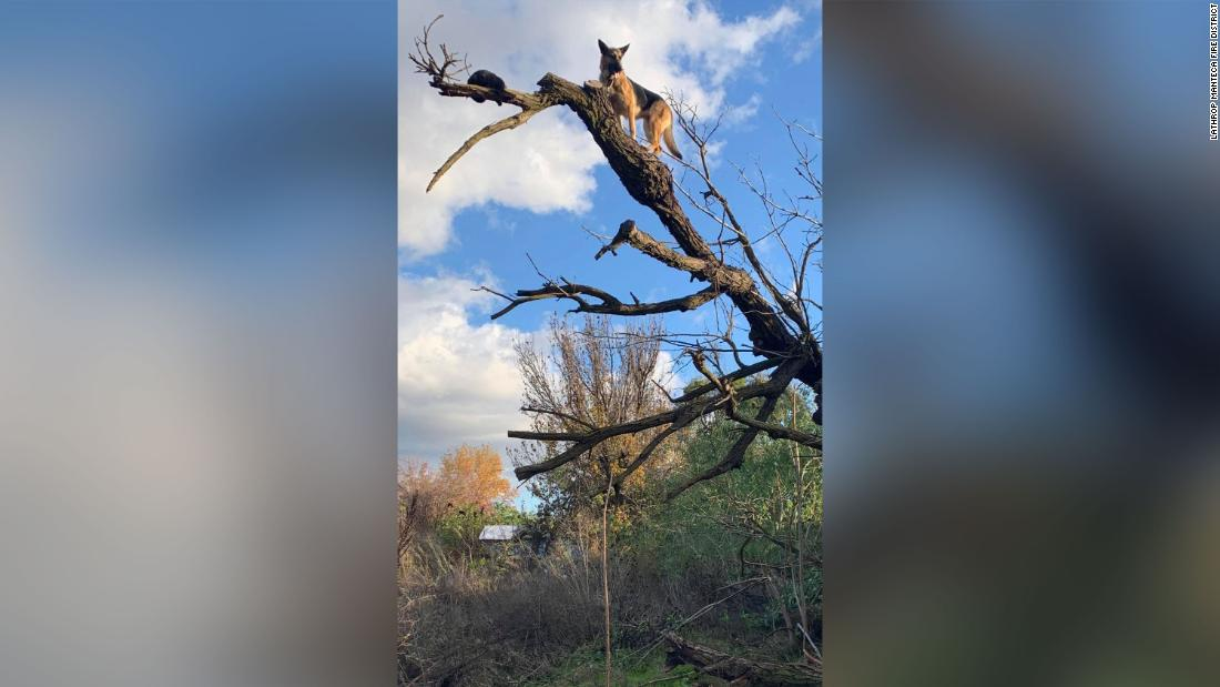 Are you furreal? Dog chases cat up tree and gets stuck, too. Firefighters have to rescue both