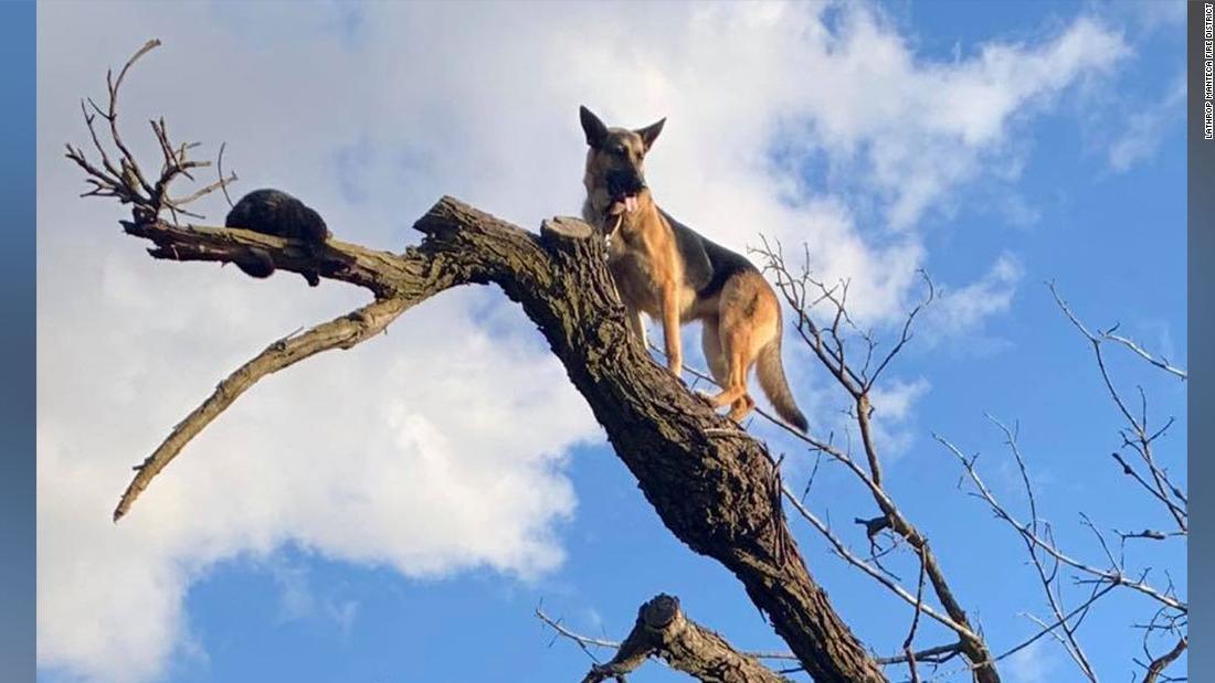 まfurreal? 犬追うねこまでツリーがこだわった。 消防救助の両方