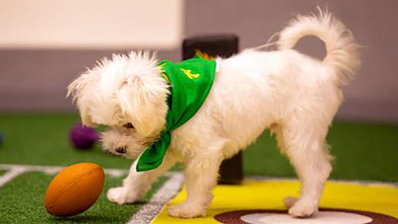 """""""Puppy Bowl"""" Seasons 14 and 15: Who needs the Super Bowl when you can watch the most adorable pups hit the field instead? (Hulu)"""