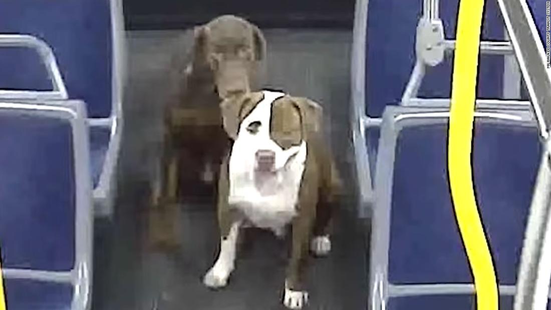 2 σκυλιά στο σπίτι, χάρη σε μια αυτο-περιγράφεται γητευτής των σκύλων και την κομητεία λεωφορείο