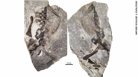 A 300-million-year-old lizard might be the earliest animal to care for its offspring, a new study says