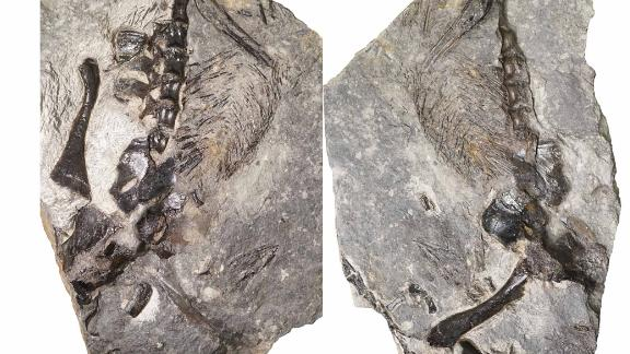 A 300-million-year-old fossil shows an ancient lizard-like creature with its tail wrapped around what appears to be its offspring -- proof, researchers say, that even Paleozoic creatures made good parents.
