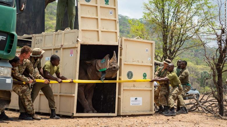 British troops worked alongside African Parks to transport the animals.