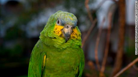 A file photo of a green parrot. Florida officers say a parrot made sounds like someone screaming for help in Lake Worth Beach