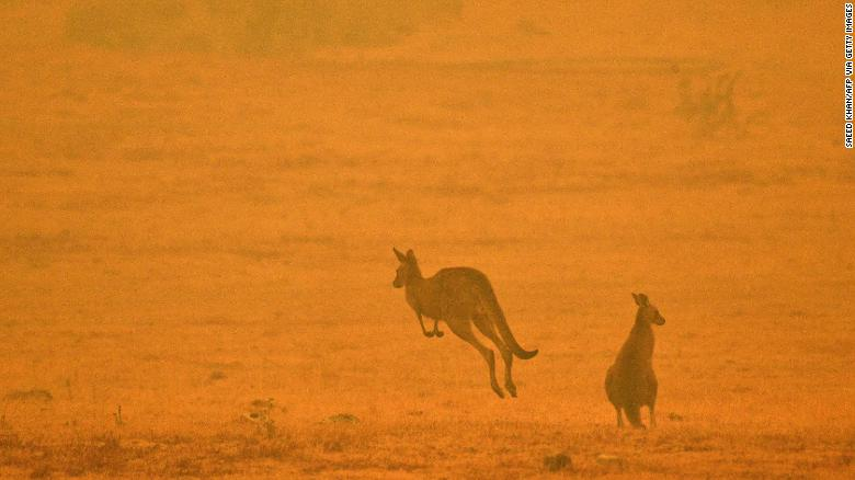 A kangaroo in a smoky field on the outskirts of Cooma, New South Wales on January 4, 2020.