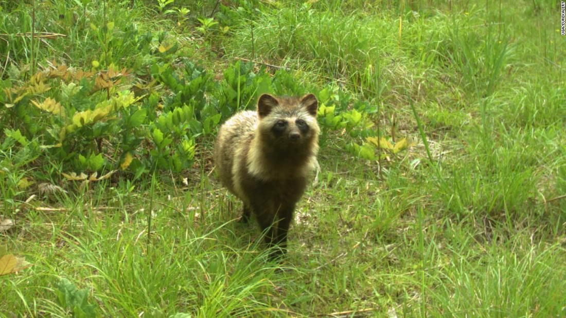 Tierwelt floriert rund um Fukushima