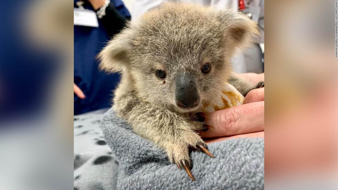 On a Good Note: Pouches For Australia's Orphaned Animals And A 17-Year-Old NASA Intern Discovers a Planet - cover