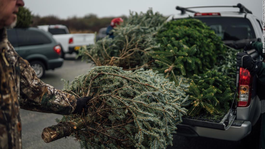 Thousands donated Christmas trees to help restore a state park that suffered after Hurricane Sandy