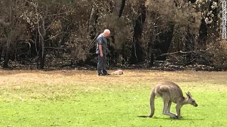 Vet Chris Barton stands over a kangaroo he has just euthanized on the Mallacoota golf course, in southeastern Australia.