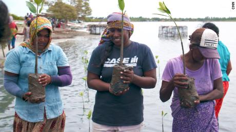 Jeewanthi Perera (center) and other volunteers plant mangrove saplings.