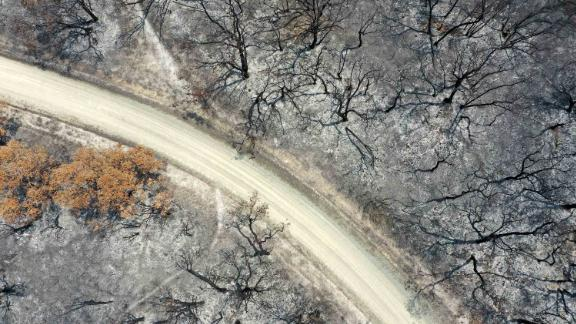 An aerial view shows a track running through trees that were scorched by bushfires in East Gippsland, Australia, on Thursday, January 9.