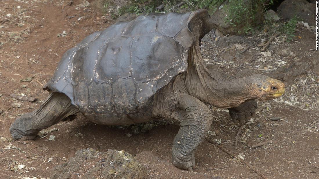 Hasil gambar untuk diego turtle
