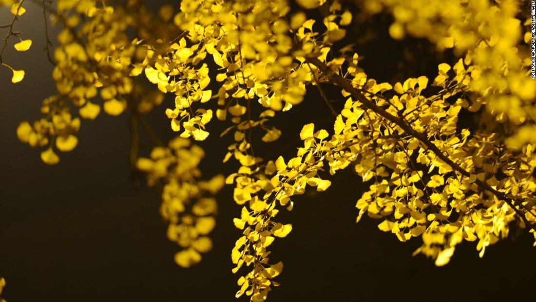 一部の樹木を生かし、1000年以上、研究者が行っか