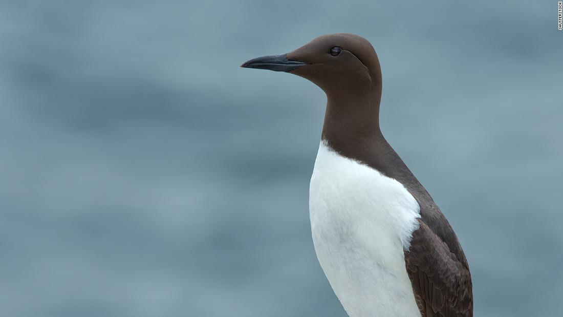 Blob heißes Wasser in den Pazifischen Ozean getötet, eine million Seevögel, sagen die Wissenschaftler