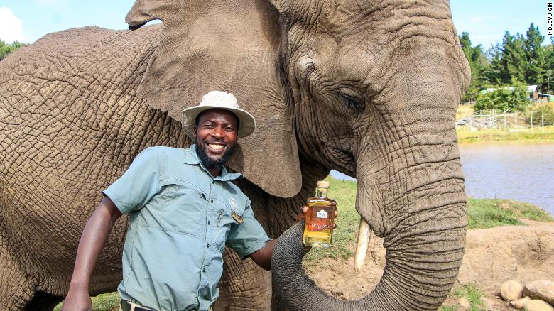 A guide at Knysna Elephant Park with a bottle of Indlovu Gin.