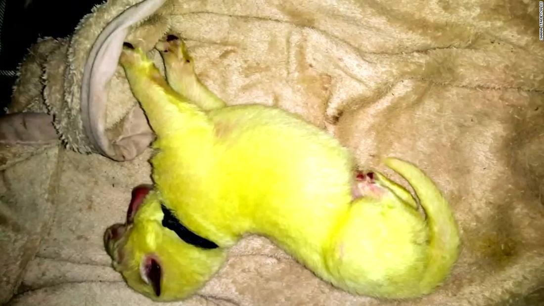 Ένας σκύλος δίνει τη γέννηση σε μια πράσινη κουτάβι, τώρα ονομάζεται