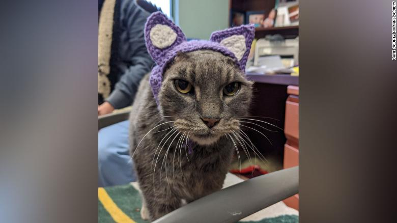 Cat Gets Knitted Ears