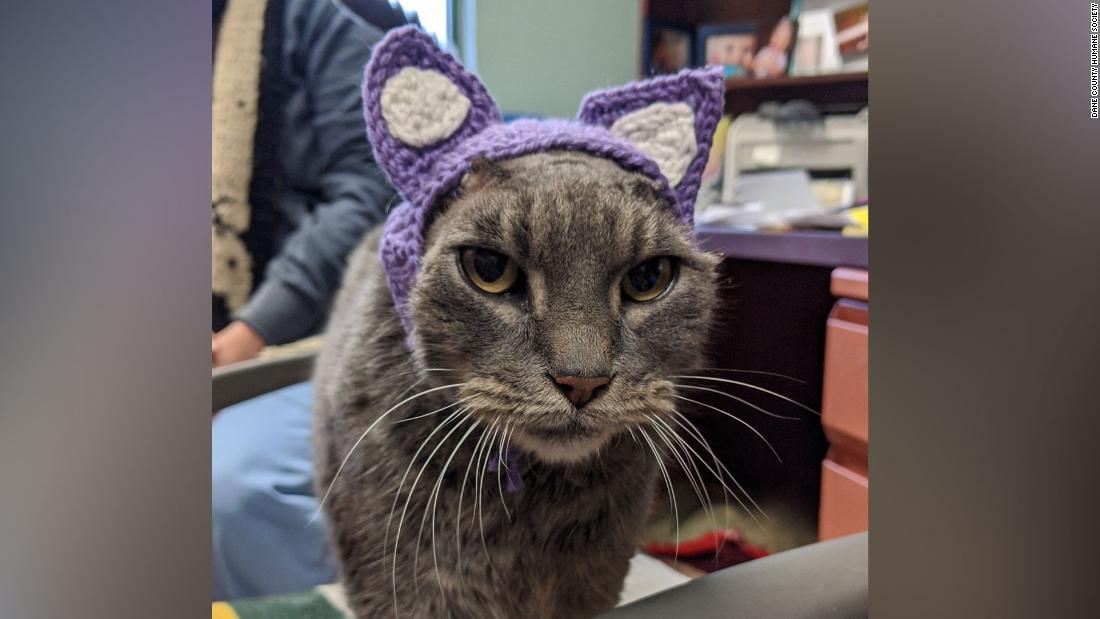 Eine streunende Katze ohne Ohren hat einen neuen Satz von lila, Dank der Tierfreund crochets