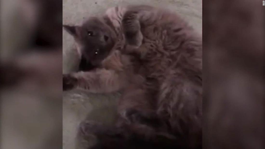 テキサス州の家族は吐後の猫が誤って致死処分による獣