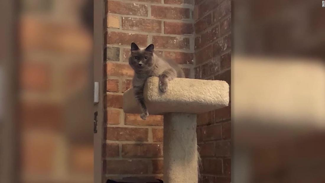 A Texas family is heartbroken after their cat was accidentally euthanized by a vet