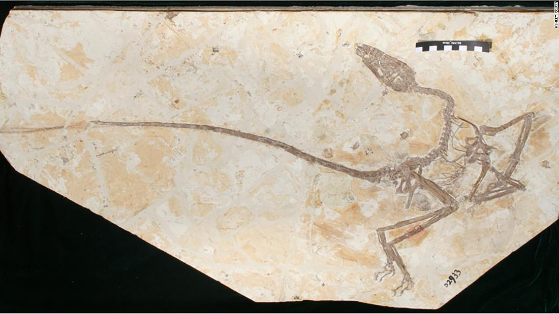 The Wulong bohaiensis fossil found in China's Jehol Province  shows some early, intriguing aspects that relate to both birds and dinosaurs.