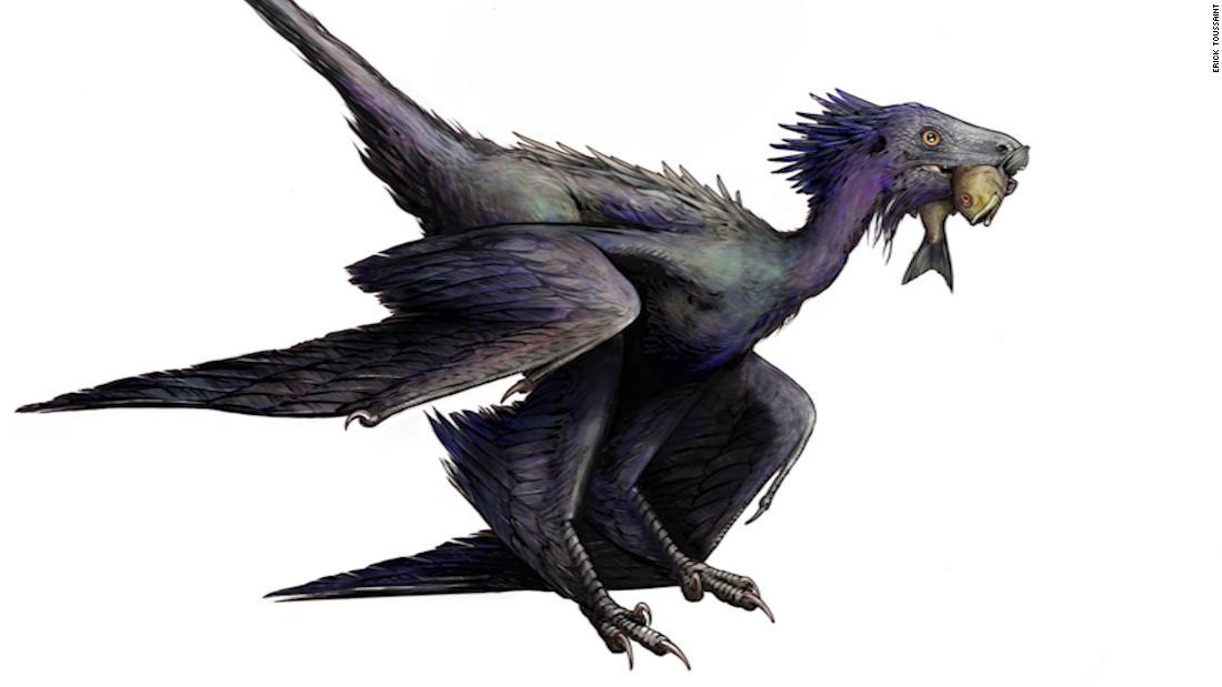 Neuer Blick auf gefiederte Dinosaurier-Arten