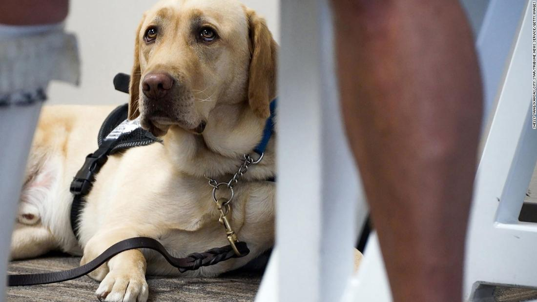 Federal proposal would allow airlines to block emotional support animals from flying
