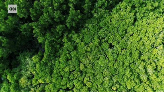 sri lanka mangroves intl C2E_00012908.jpg