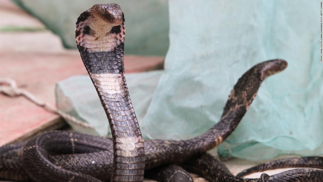 coronavirus snake meat
