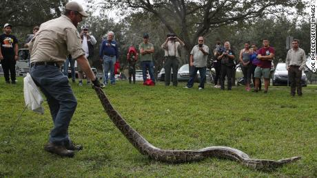 SUNRISE, FLORIDA - JANUARY 10:  Robert Edman, with the Florida Fish and Wildlife Conservation Commission, gives a python-catching demonstration before potential snake hunters at the start of the Python Bowl 2020 on January 10, 2020 in Sunrise, Florida. The Florida Python Challenge 2020 Python Bowl taking place a few weeks before the Super Bowl being held in Miami Gardens, is a 10-day competition to remove Burmese pythons from the Florida Everglades due to the threat to the delicate ecosystem that they pose as they have no predators and reproduce rapidly. (Photo by Joe Raedle/Getty Images)
