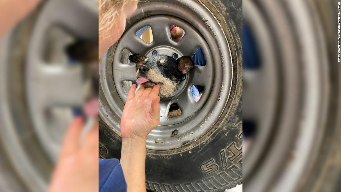 消防救助犬としていることから頭部にこだわったホイール