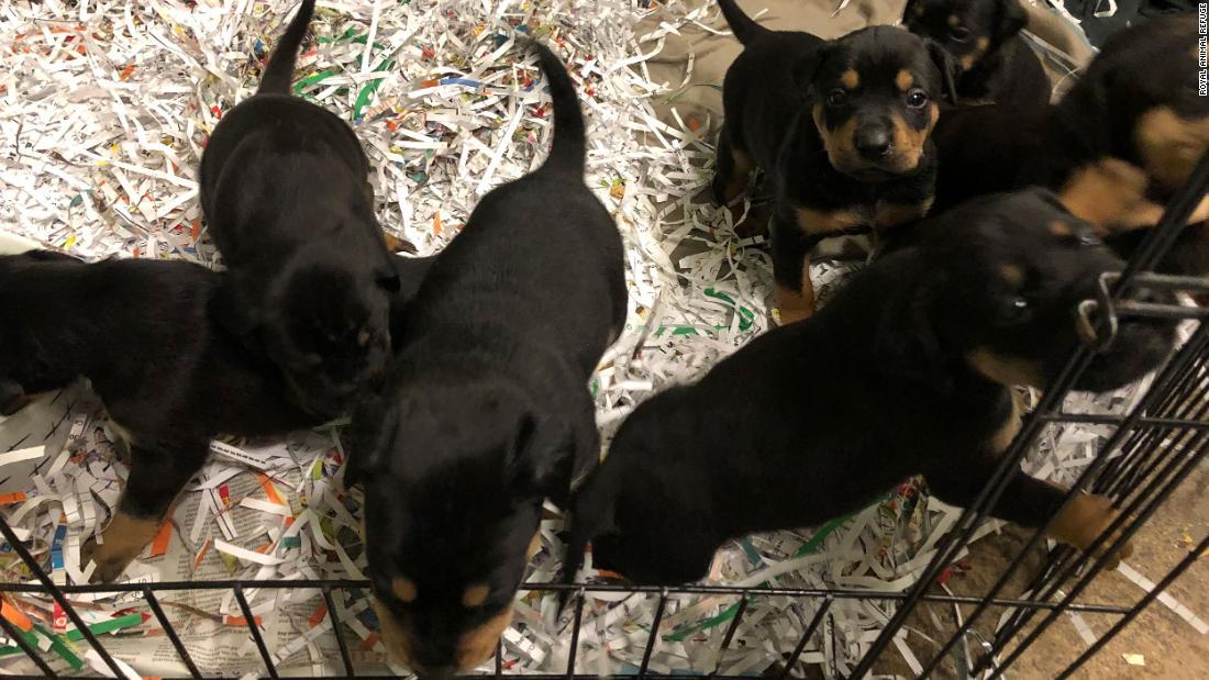 200125191954 02 dog leads volunteers to puppies trnd super tease
