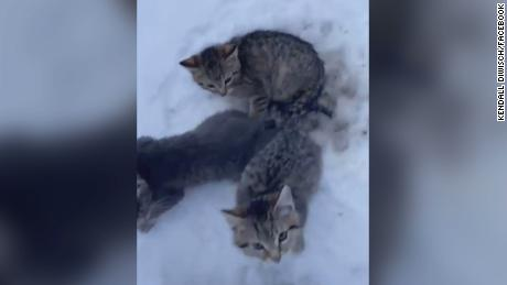 Three kittens were stuck in the snow, before they were rescued by a man who used his coffee.