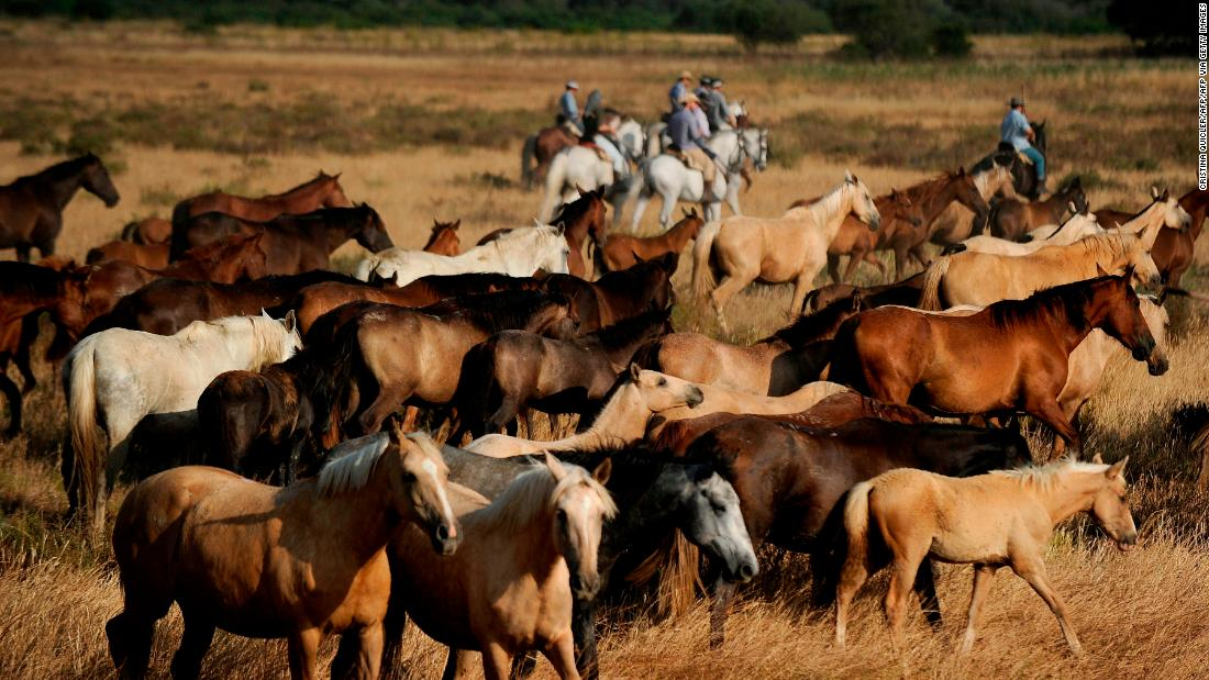 "Horsemen ride next to mares during the annual ""Saca de las Yeguas,"" where herds of free-roaming horses are rounded up from the marshes and forests at Doñana National Park in southwestern Spain."