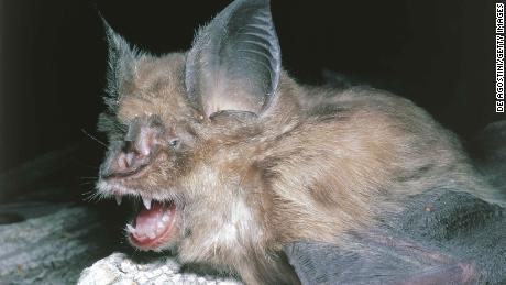 Bats, the source of so many viruses, could be the origin of Wuhan coronavirus, say experts