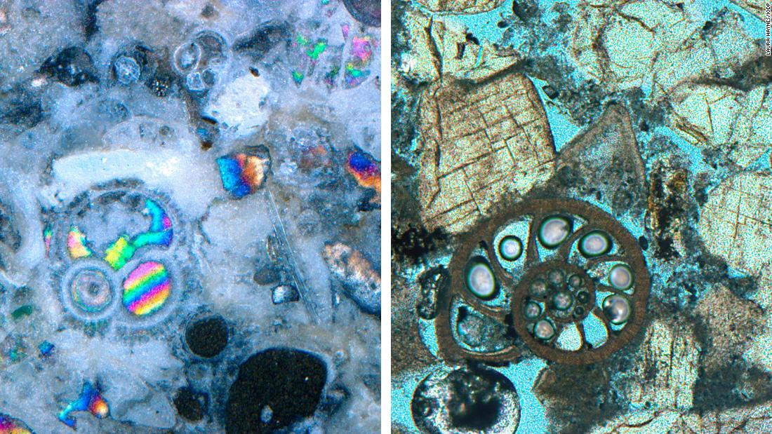 Microfossils examined by Laura Haynes aboard the JOIDES Resolution. The rainbow colored microfossil on the left and the carbonate microfossil on the right (stained blue) are fractions of a millimeter wide.