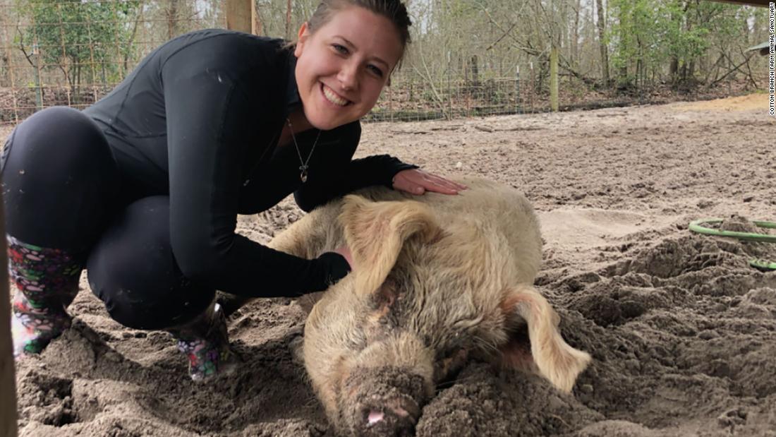 Sebuah tempat perlindungan hewan ini mencari relawan untuk berpelukan dengan babi