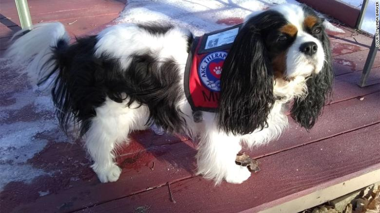 Murfee, a 3-year-old Cavalier King Charles Spaniel, won the 2020 Fair Haven mayoral race on March 3.