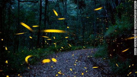 Fireflies are seen at a sanctuary conserved and protected by the National Forestry Commission  near Nanacamilpa, Tlaxcala, Mexico on July 20, 2017.