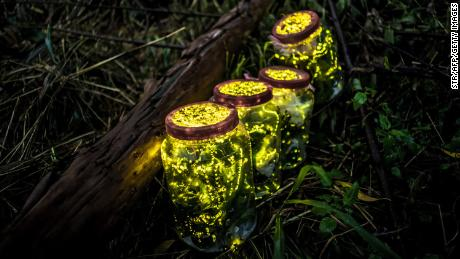 This photo taken on August 18, 2015 shows fireflies kept in jars during in Guangzhou in China's southern Guangdong province.