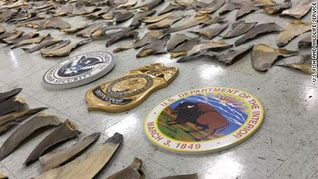 18 boxes of shark fins were seized in Miami port on February 3.