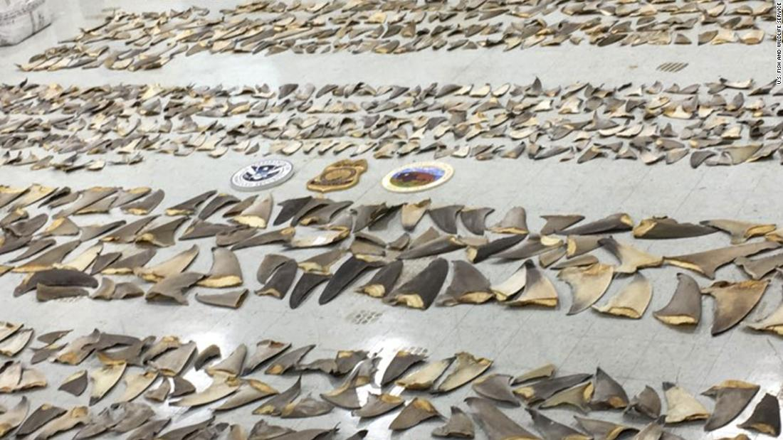 Nearly $1 million worth of shark fins seized by wildlife inspectors in Florida