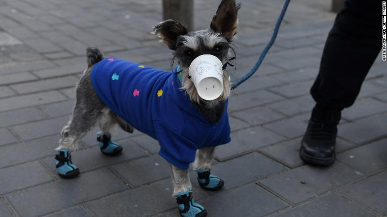 A dog in Beijing wears a makeshift mask constructed from a paper cup.
