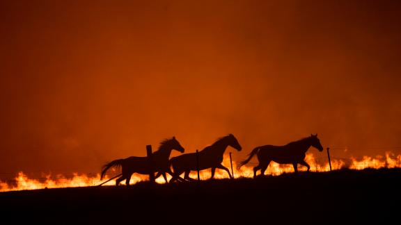 Horses panic as a fire burns near Canberra, Australia, on Saturday, February 1.